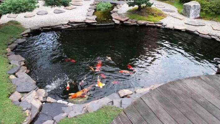 Cara Mudah Dan Singkat Membuat Kolam Ikan Koi Superperikanan