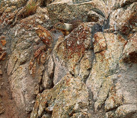 23 fotografías de animales camuflados, puedes encontrarlos?