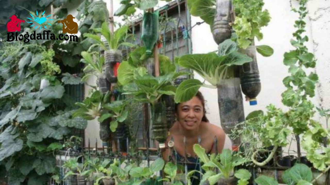 Ide desain Kebun Sayur Gantung