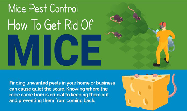 How to Get Mice's Rid? #infographic