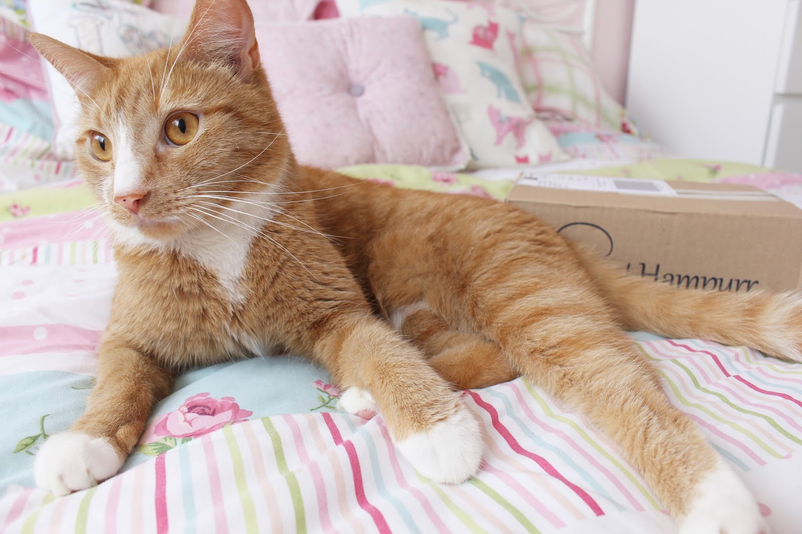 Cat Hampuur Review