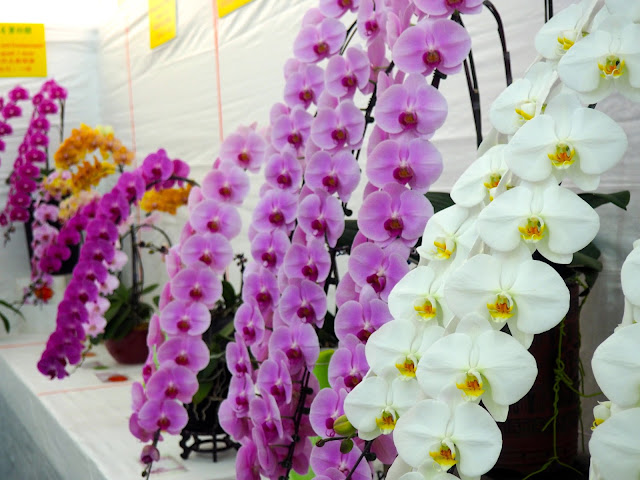 Flower arrangements of orchids at Hong Kong Flower Festival 2017