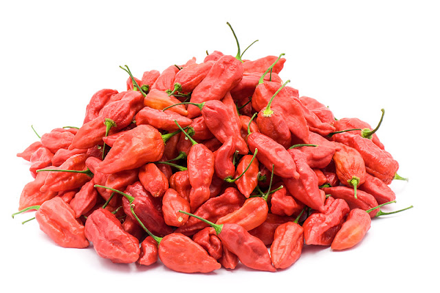 Bhut Jolokia chili plodovi