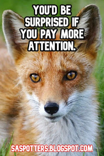 You'd be surprised if you pay more attention.
