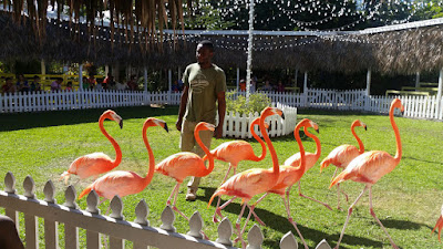 Pink flamingos with instructor