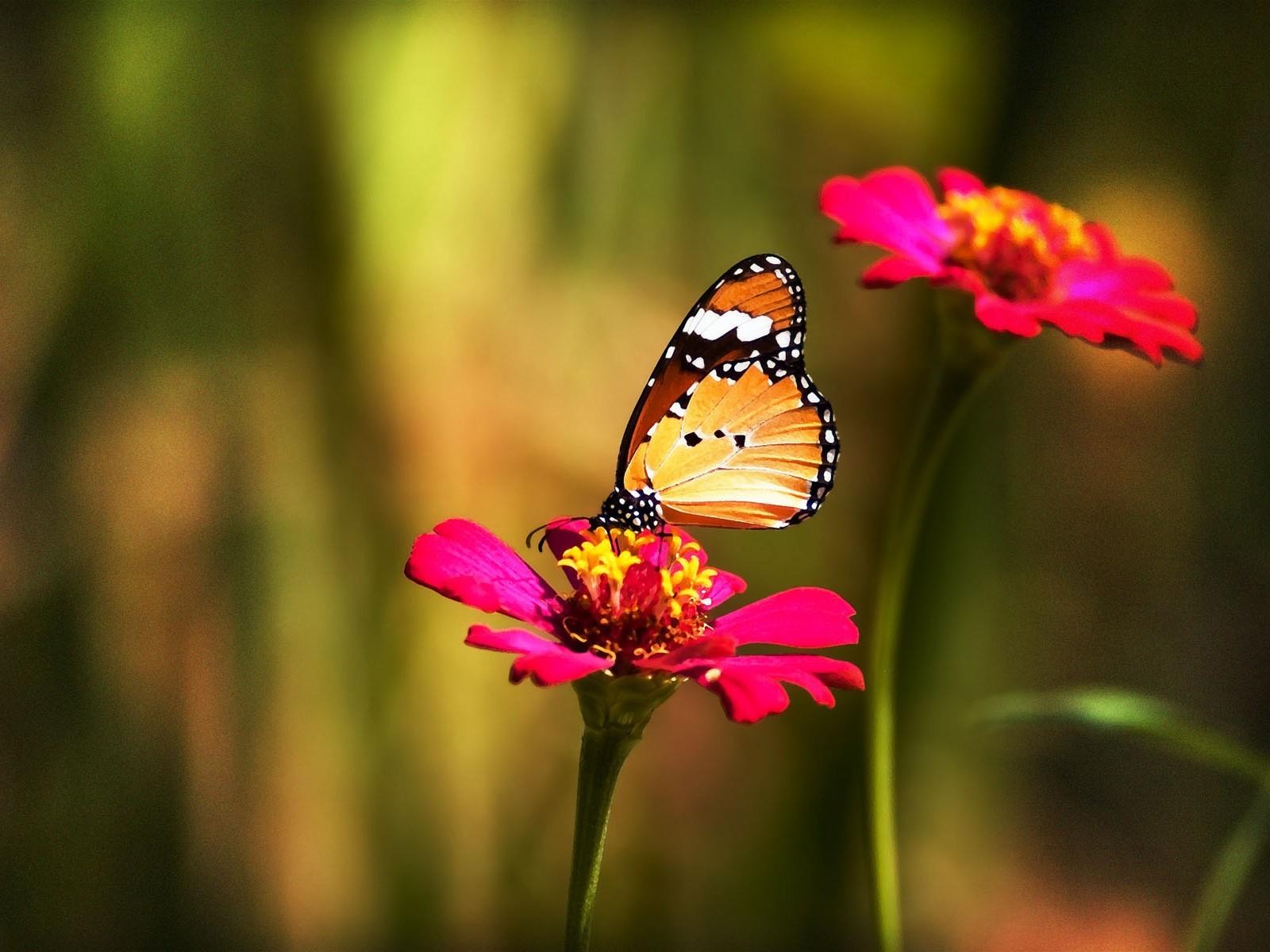 Hermosas Mariposas En La Naturaleza