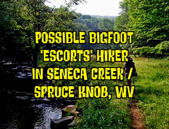 Possible Bigfoot 'Escorts' Hiker in Seneca Creek / Spruce Knob, West Virginia