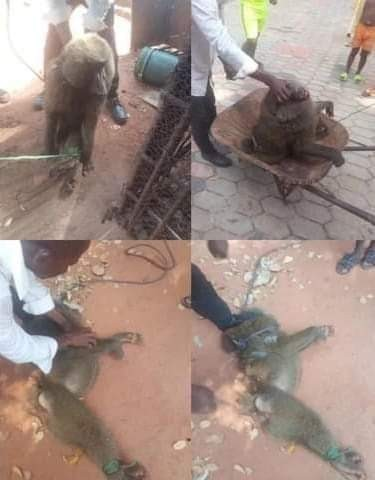 Baboon arrested for assaulting  a 13-yr-old girl in Anambra