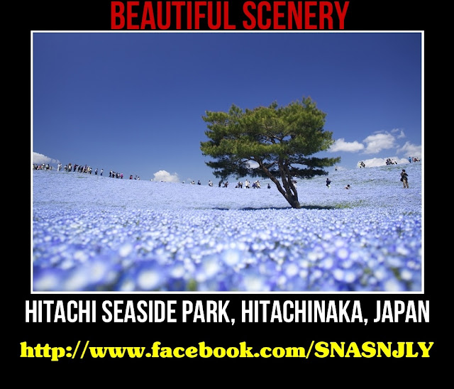 Hitachi Seaside Park, Hitachinaka, Japan,Beautiful scenery