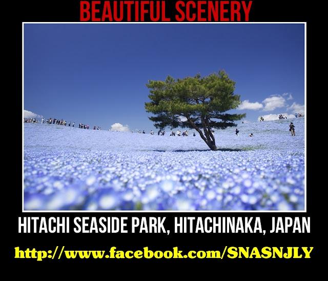 Hitachi Seaside Park, Hitachinaka, Japan,Beautiful scenery