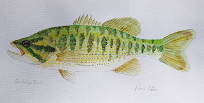 Guadalupe Bass, Pat Kellner, P. H. Kellner, Fishing Art, Fly Fishing Art, Texas Freshwater Fly Fishing, TFFF, Fly Fishing Texas, Texas Fly Fishing