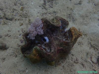 Underwater photography 水攝 Macro 微距 Scuba dive 潛水