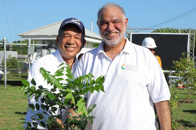 Inicia programa de siembra de un millón de árboles de caoba en Peravia y Punta Catalina