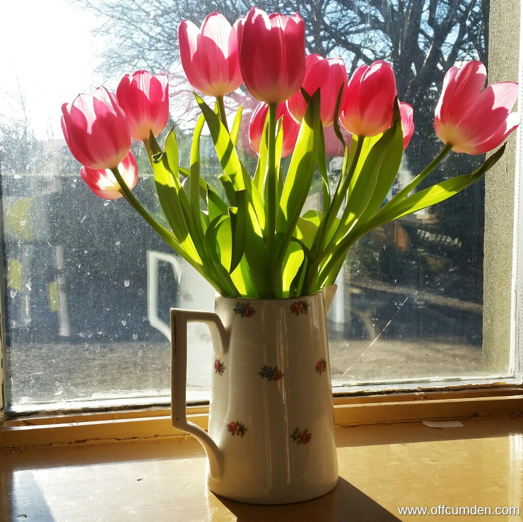 tulips in sunshine