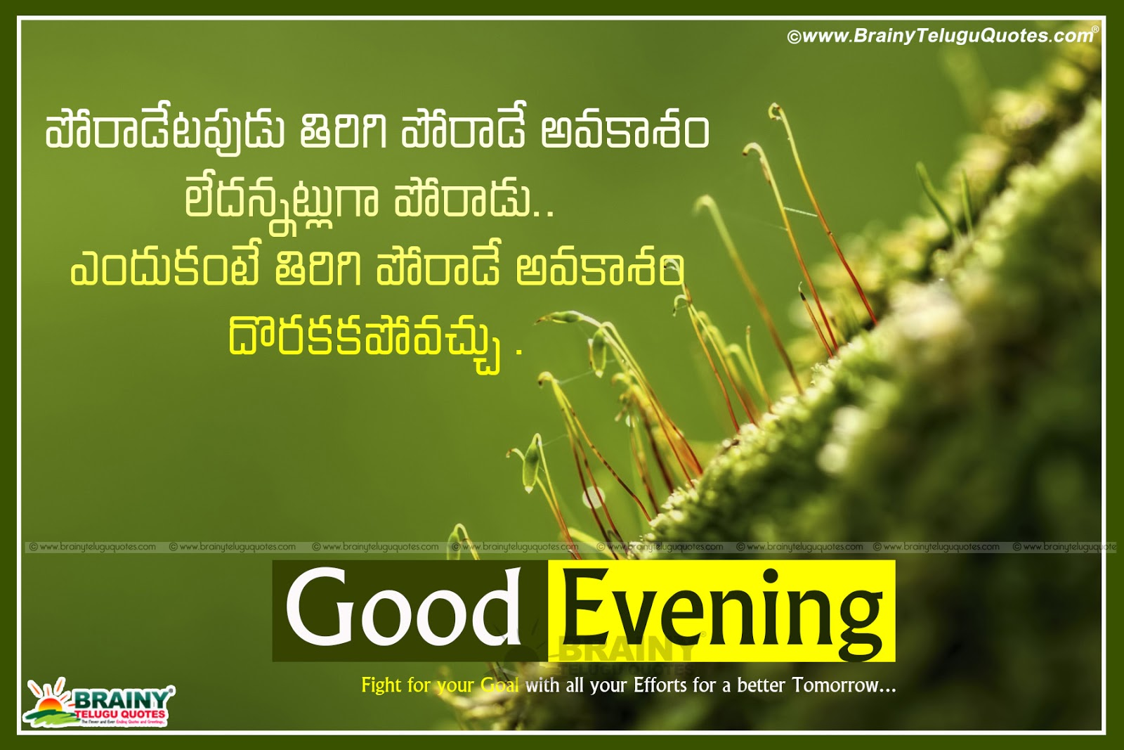 Good Evening Quotes In Kannada Good Quotes