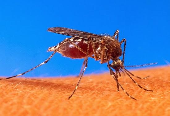 Tips Mengusir Nyamuk Secara Alami