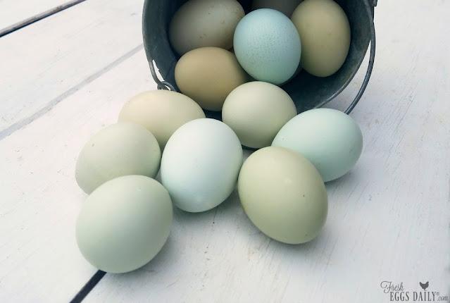 blue eggs on shiplap
