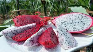 Türkiye'nin tescillenen ilk tropikal meyvesi hangisidir?