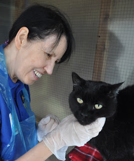 woman in a Cats Protection t-shirt giving a black cat a chin rub