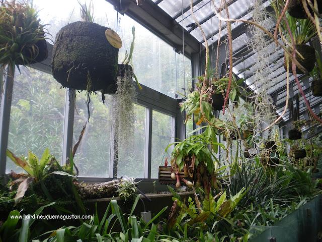 Interior de la estufa de Graells o de las palmas del Jardín Botánico de Madrid
