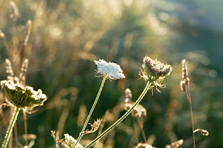 Fungsi Cahaya Sebagai Faktor Luar yang Mempengaruhi Pertumbuhan dan Perkembangan pada Tumbuhan