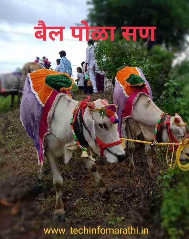 बैलपोळा मराठी माहिती   Pola Festival Information In Marathi 2021