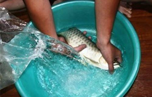 Bí mật gây mê tôm cá trước khi vận chuyển 3