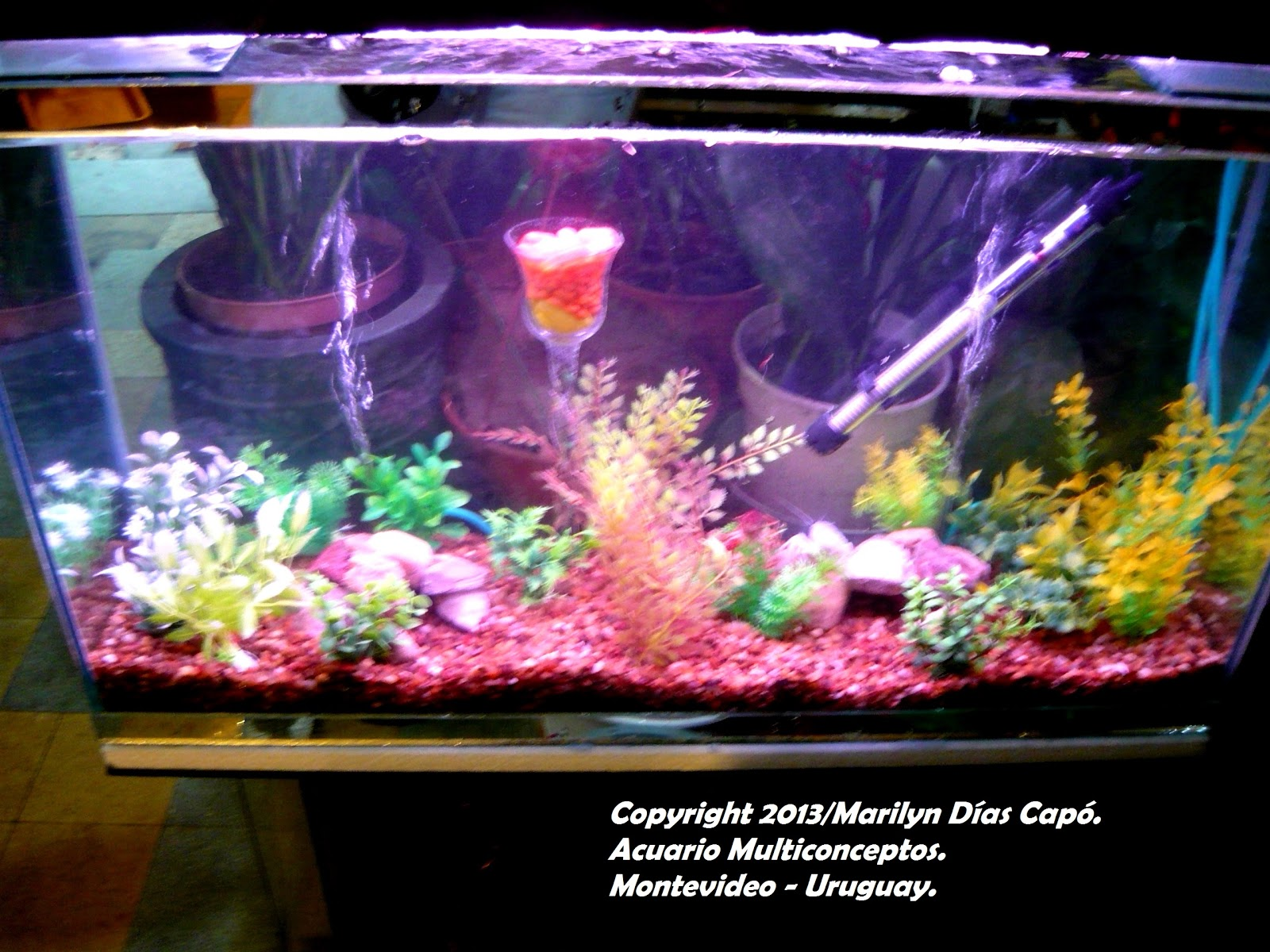 Peces tropicales de agua dulce mi primer acuario c mo for Como construir un lago para peces