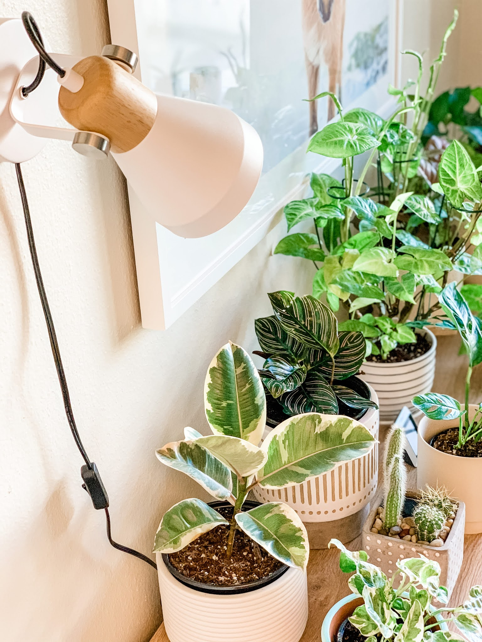 Houseplants on a table and a white indoor grow light