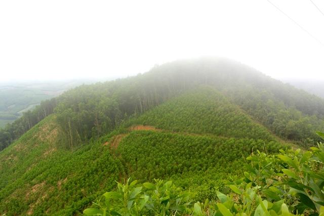 Quảng Ngãi UBND huyện thua kiện vì thu hồi đất sai luật