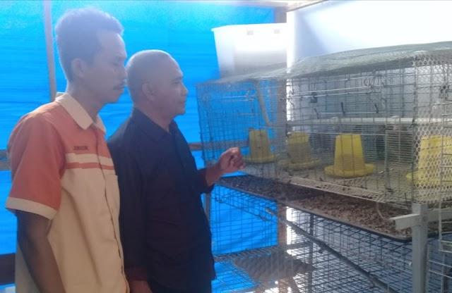 Patut Dicontoh, SMKN 1 Soromandi Kembangkan Produksi Telur Puyuh dan Susu Kambing