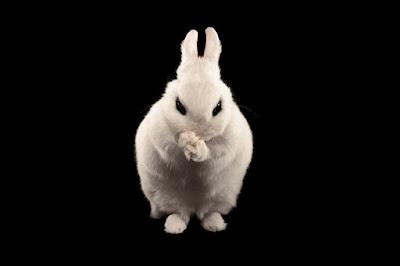 Ketahui Virus 'Bad Rabbit' Ransomware dan Cara Mencegah Serangan Ransomware