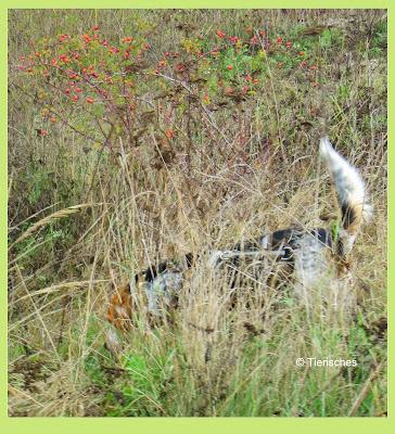 Blog über Hunde
