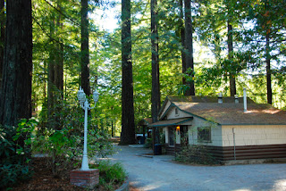 Cabin in the Redwoods Miranda Garden Resort California