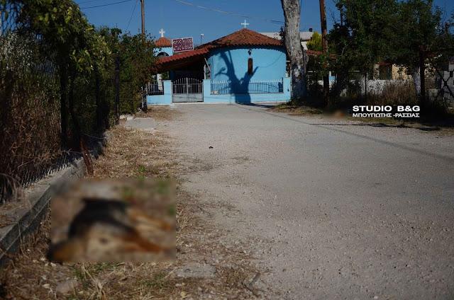 Αποτρόπαιο θέαμα στην Αργολίδα: Κτηνωδία με νεκρά σκυλάκια από φόλες