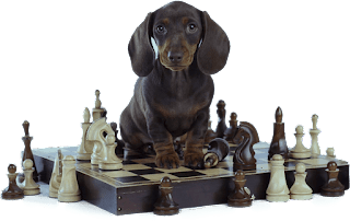 🐶 Brain Training For Dogs Review - Professional Dog Trainers