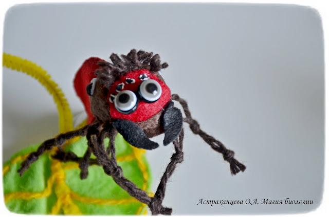 КОАПП_почему кусают насекомые_магия биологии, паук эварха