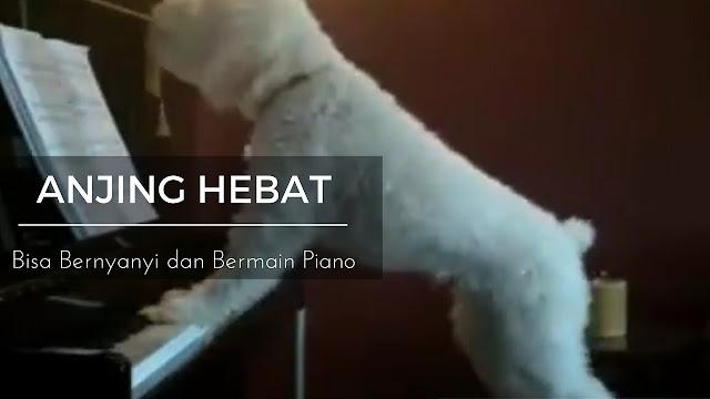 HEBAT! Siapa Sangka Kalau Lagu Ini Dinyanyikan Oleh Anjing!