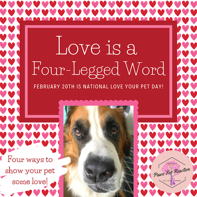 February 20 is National Love Your Pet Day: How to show your pet some love