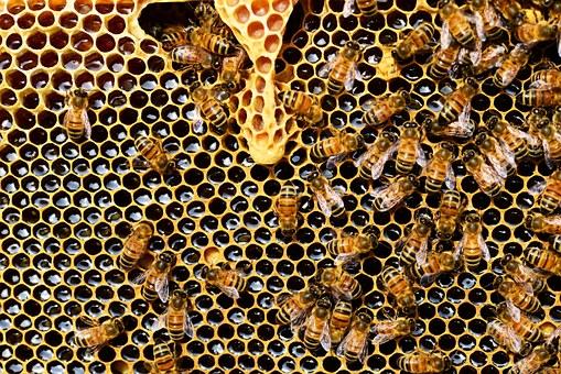 Lebah Si Hewan di Al Quran