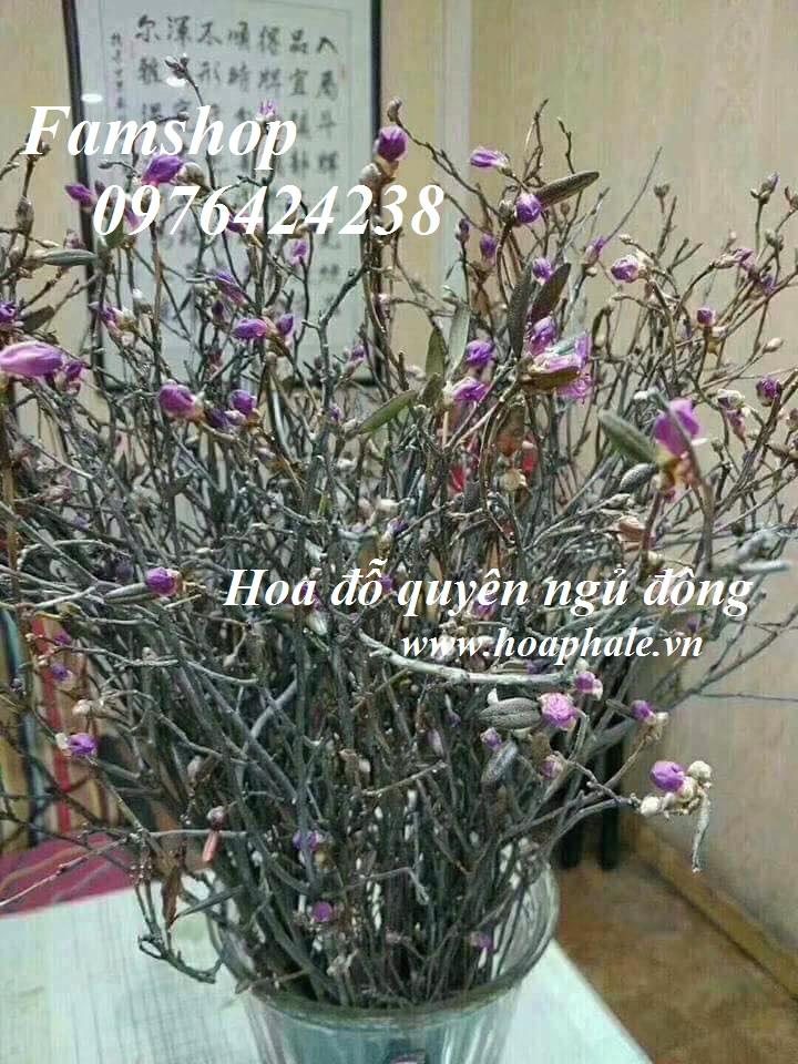 Hoa do quyen ngu dong o Gia Lam