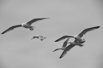 "Five seagulls fly in the sky in black and white movie still for Robert Eggers's A24 film ""The Lighthouse"" (2019)"