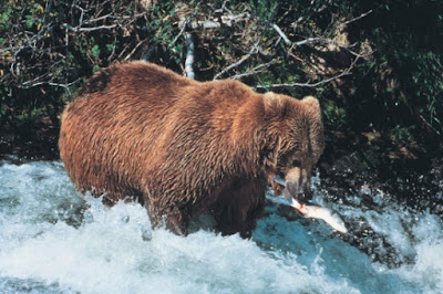Brown bear DNA genome creation science