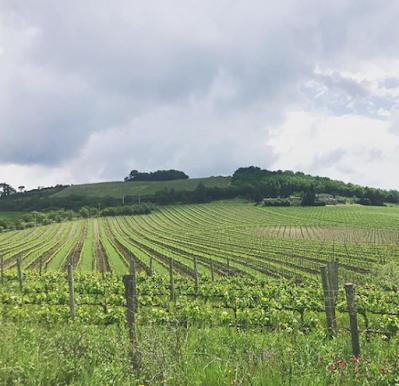 vigne montosoli brunello