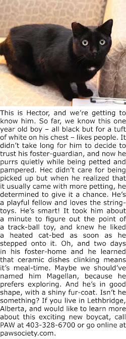 MEET HECTOR!