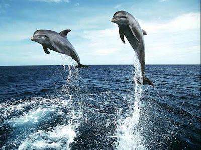 Imagen de delfines saltando sobre el mar  [14-7-20]