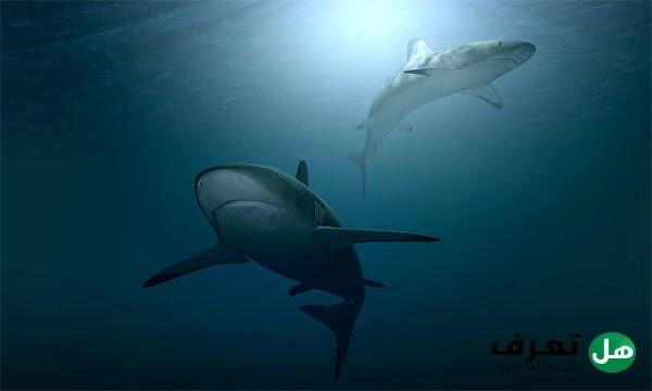 معلومات عن سمك القرش