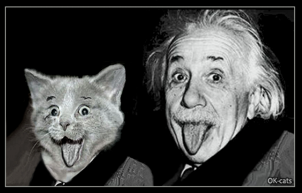 Photoshopped Cat Picture • Albert Einsten and his kitty two genius sticking their tongues out