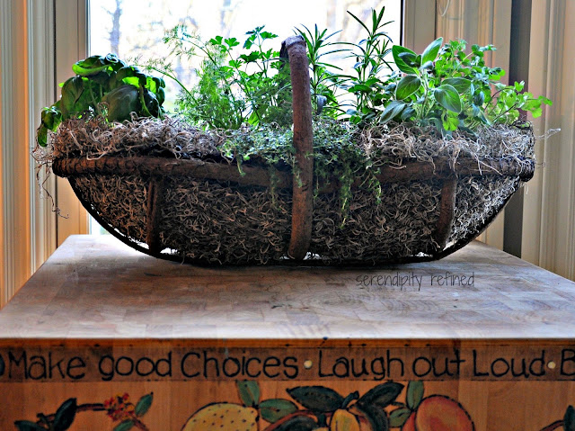 Kitchen herb veggie repurposed container grow portable garden grape vine chicken wire moss basket