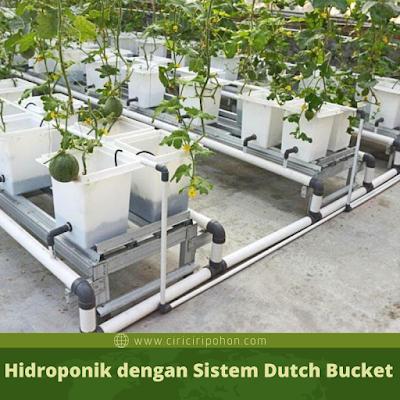 Ciri Ciri Pohon Hidroponik Sistem Dutch Bucket
